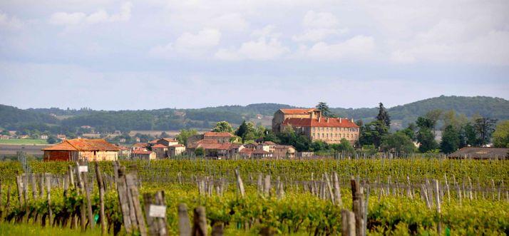 Les vignes de Saint Mont ©P.Marcusse