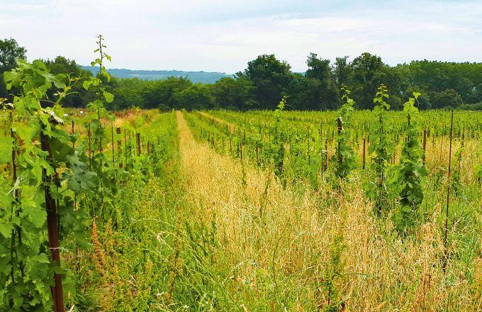 Au printemps 2019,  Les Vignerons de Buzet ont planté 17ha de vignes avec l'objectif d'anticiper l'avenir.  Photo : Les Vignerons de Buzet