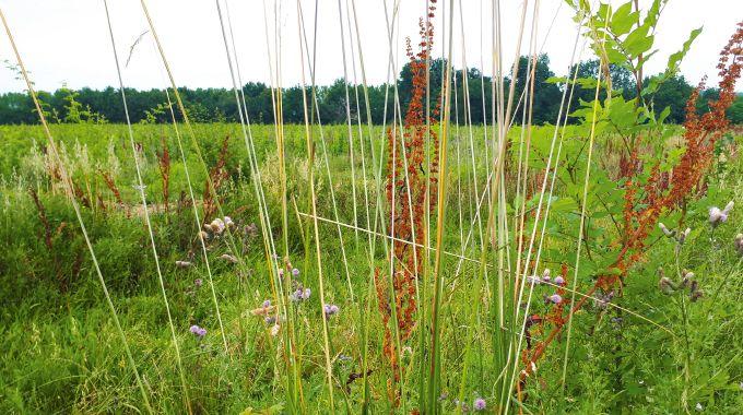 Les noues sont des zones humides installées sur le vignoble avec l'objectif  de diminuer les températures du milieu. Photo: Les Vignerons de Buzet