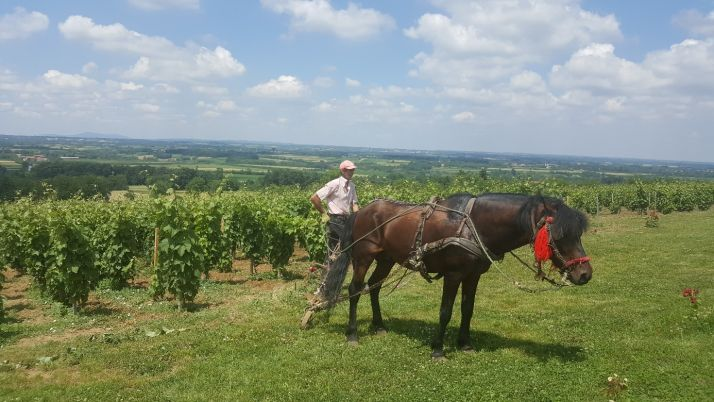 Les vins serbes se positionnent comme un alliage entre modernité et tradition (S.Badet)