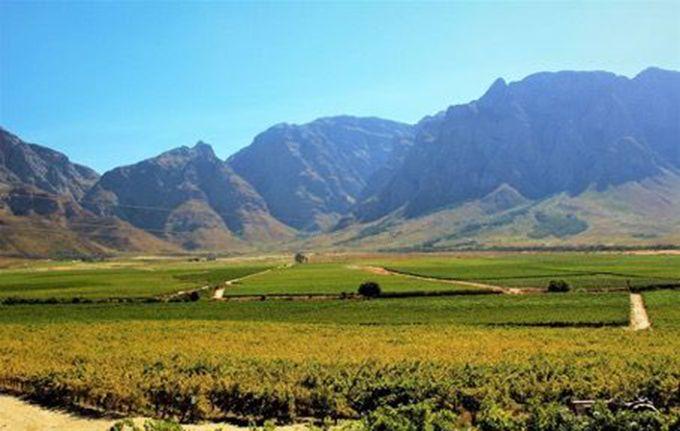 Vignoble en Afrique du Sud. Photos : DR