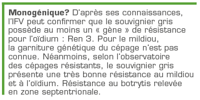 D'après ses connaissances,  l'IFV peut confirmer que le souvignier gris possède au moins un « gène » de résistance pour l'oïdium: Ren 3.