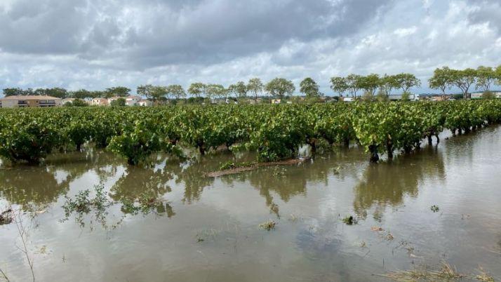 Vignes inondées dans le Gard après l'épisode cévenol du 14 septembre 2021 (Héraclès)