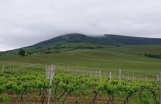 Les Carpates sont connues pour le comte Dracula, un peu moins pour leurs vins. (Château Chizay et Stéphane Badet)