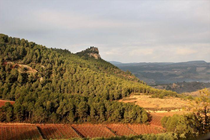 Les parcelles spécifiques dans la région de Penedès sont clairement limitées et réglementées par le DO Cava. Credit photo : Carlos Parrodi