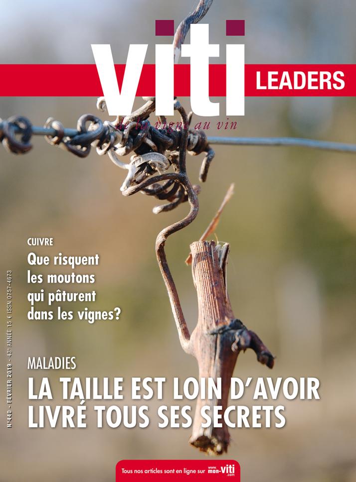 Viti leaders 440 février 2019