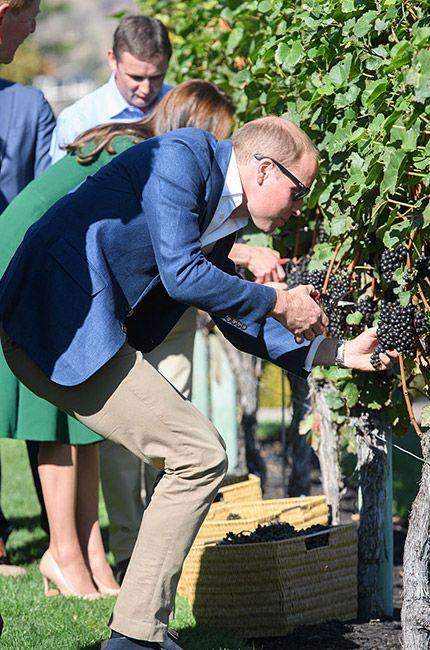 william-kate-canada-winery-grapes.jpg