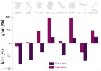 Certains pays risquent de perdre beaucoup de vignoble avec le changement climatique