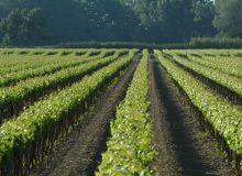 Domaine viticole de l'isle saint pierre en camargue