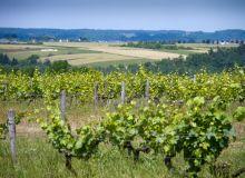 323 nouveaux viticulteurs bio en 2016. © L. Theeten / Pixel Image