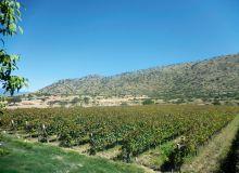 Le gouvernement bolivien a la volonté de développer la filière viticole et l'export, surtout sur les marchés de proximité comme le Brésil ou vers les USA ou l'Europe. © S. Badet