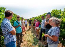 Cet été 2018, le BNIC a présenté aux viticulteurs et aux techniciens viticoles les parcelles des premiers cépages résistants.