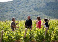 Parmi les prestations proposées au Domaine Joseph Lafarge: une visite accompagnée de la vigne. © Domaine Joseph Lafarge