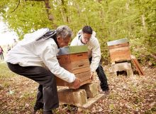Les Vignerons de Buzet analysent l'impact de leurs pratiques agricoles sur les abeilles et sur l'environnement grâce  à des ruches connectées. © Vignerons de Buzet