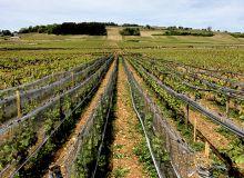 Système Whailex mis en place  dans un vignoble à Volnay (Côte-d'Or). © Chambre d'Agriculture de Côte-d'Or