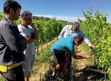 Par le biais d'une SCIC, Vignerons Ardéchois a racheté  des vignobles pour y installer des jeunes viticulteurs. © Uvica