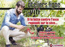 Si la lutte contre l'esca reposait sur la sève...  Un atelier en ligne de Viti diffusé lundi 27 juin 2016 à 17h30,  en partenariat avec Sofrapar. Photo : sepy/Fotolia