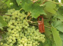 Diffuseur Rak dans les vignes