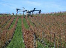 drone et vigne