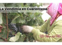 Les vendanges 2020 en Argentine pendant la pandémie de coronavirus.