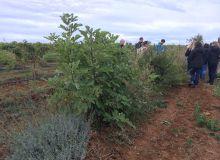 Le domaine de la Massole à Servian dans l'Hérault a planté des haies entre les rangs de vigne (S.Favre/Média et Agriculture)