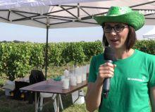 De Sangosse, des innovations en biocontrôle pour les vignes