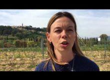Pourquoi utiliser le bail cessible hors cadre pour installer des jeunes viticulteurs?