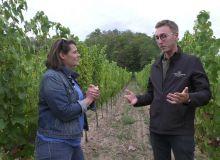 Sillon d'avenir épisode #12, avec Ludovic Hauller, viticulteur en Alsace