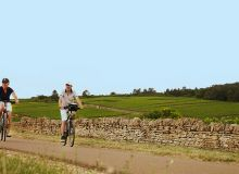 Des fiches sur les consignes à respecter dans le vignoble ont été éditées à destination des prescripteurs touristiques bourguignons. BIVB / Lukam