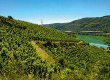 Sur la rive gauche du Rhône, le coteau de Seyssuel  a retrouvé une soixantaine d'hectares de vigne. Photo : I. Aubert/Pixel6TM