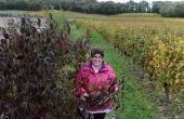 « L'effet de la biodiversité se voit aussi sur les vignerons qui sont plus observateurs », se félicite Ma-rie-Anne Simonneau, animatrice chef de projets au syndicat Saumur-Champigny. Photo : Carole Pilard