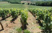 En Bourgogne, l'homogénéité parcellaire est impactée par les complantations successives. Photos: E. Thomas/Pixel Image