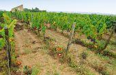 L'interprofession France vin bio a confié à la mission prospective de FranceAgriMer avec l'appui de l'IHEV Montpellier SupAgro une étude prospective pour élaborer des stratégies gagnantes. © L. Theeten/pixel image