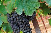 Le projet Pacov vise à étudier le devenir du cuivre d'origine viticole dans les sols et les eaux à l'échelle de la parcelle et du bassin-versant viticole. Photo : L. Theeten/Pixel Image