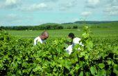 95% des problèmes dans l'entreprise agricole seraient liés à des relations mal vécues, mal gérées. Photo : S. Favre/Pixel image