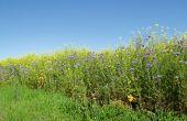 Pour une jachère fleurie, un développement naturel est envisageable, mais des semis peuvent également être réalisés. Il faudra privilégier des espèces locales. Il est en revanche fortement déconseillé d'implanter des surfaces fleuries en interrang dans les zones de lutte obligatoire contre la flavescence dorée. Photo : R.Poissonnet/Pixel image