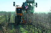 Le choix de la mécanisation de la taille impacte la conduite globale du vignoble. Reprise manuelle, mais aussi travaux en vert doivent être adaptés. Photos : o.lévêque/pixel image