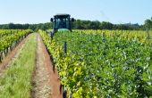 Couvert végétal à base de féverole, IFV Lisle-sur-Tarn, mai 2013. © L. Gontier / IFV