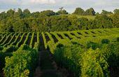 Vignobles du domaine du Tariquet, près d'Eauze (Gers). Avec 8millions de cols par an, la marque de la famille Grassa est «l'autre» grand ambassadeur des côtes-de-gascogne. © M. Carossio