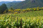 Le vignoble limouxin a été l'un des sites européens retenus dans le cadre européen  du projet Life + BioDiVine entre2010 et2014. Le bilan «biodiversité» est positif. Photo: CA Aude