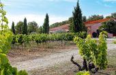 Olivier Nasles a également mis  en pratique la stabulation à froid sur rosé dans son domaine de Camaïssette, situé à quelques kilomètres d'Aix-en-Provence. Photos: O.Nasles