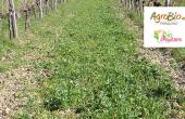 Une bonne connaissance de son sol permet d'adapter au mieux les apports. Photos : E. Maille/Agrobio Périgord