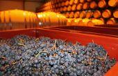 La Cave des Vignerons de Tutiac a testé la vinification en barrique dans 8 fûts de 400l en 2014, et pense doubler ces volumes en 2015.  Photo : Vignerons de Tutiac