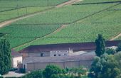 La coopérative Terres secrètes a été la première cave de Bourgogne  à être labellisée VDD, Vignerons en développement durable. Photo: E.Thomas/Pixel Image