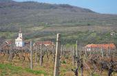 En Serbie, si l'ambition viticole est bien présente, l'export est pour l'instant limité aux marchés de proximité. © Stéphane Badet