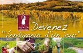 En Alsace, plus d'une centaine de prestations «Vendangeur d'un jour» ont été vendues en 2015 à des touristes français ou étrangers. DR