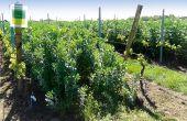 «Un couvert laissé en place tardivement maintient l'état hydrique du sol au minimum et limite la vigueur de la vigne», souligne Pierre Palmier, référent vigne chez Euralis. Photo : R. Poissonnet/Pixel image