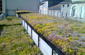 Les variétés du tapis végétalisé ont été choisies pour leur facilité d'entretien et leur résistance aux températures extrêmes. Photo : Vertige
