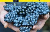 «La passion en partage» peut-on lire sur le site Internet des vins Georges Dubœuf. Cette philosophie de travail transpire maintenant aussi sur le digital et les réseaux sociaux!