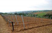 Les premières variétés résistantes françaises issues du programme de recherche Inra ResDur sont le fruit de plus de 15 années de travaux. Elles pourraient être commercialisées en 2018. Les variétés suivantes pourraient être disponibles en 2021, si leurs résistances et leurs qualités agronomiques et œnologiques sont jugées suffisantes par l'Inra.  Photos: Inra